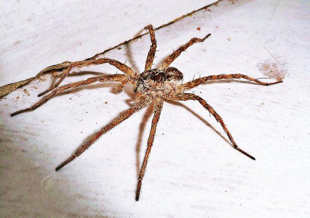 Que faire face à l'apparition d'araignées ?